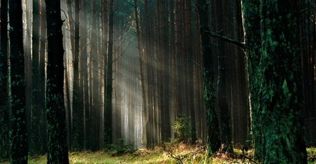 Milieuvriendelijke trouwkaarten - papier gemaakt via verantwoord bosbeheer