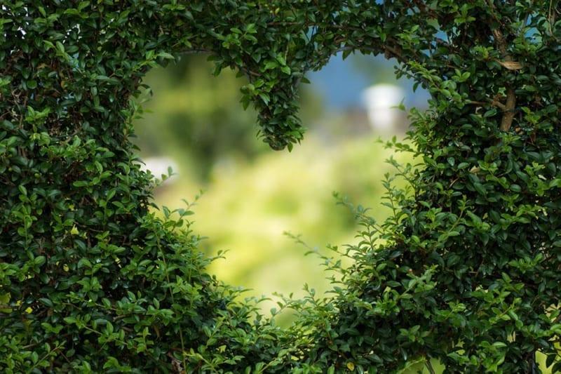 Een groene bruiloft: utopie? Hartvorm in groene heg.